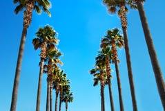 Disposição horizontal das palmeiras da fileira fotografia de stock