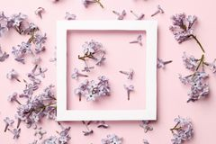 Disposi??o criativa do quadro feita de flores lil?s da mola em um fundo cor-de-rosa imagens de stock royalty free