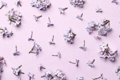 Disposi??o criativa feita de flores lil?s da mola em um fundo cor-de-rosa imagem de stock royalty free