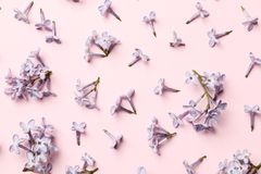 Disposi??o criativa feita de flores lil?s da mola em um fundo cor-de-rosa fotografia de stock