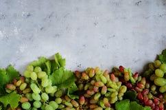 Disposición con sabor a fruta de uvas en un fondo azul apacible Los viñedos en otoño cosechan las uvas maduras en la caída, vinif fotografía de archivo