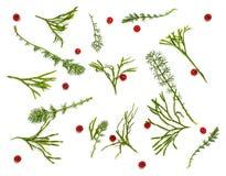 Disposición creativa de la maqueta hecha del árbol de navidad y de ramas rojas de las bayas del acebo con el espacio y la nieve d Fotografía de archivo