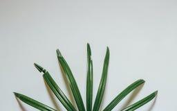 Disposición creativa de la naturaleza hecha de hojas y de flores tropicales Endecha plana Concepto del verano Foto de archivo libre de regalías
