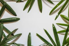 Disposición creativa de la naturaleza hecha de hojas y de flores tropicales Endecha plana Concepto del verano Imagen de archivo libre de regalías