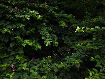 Disposición creativa del papel pintado natural hecha de hojas verdes y de la flor rosada Concepto natural del papel pintado foto de archivo libre de regalías