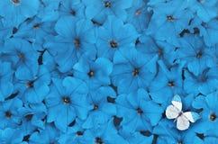 Disposición creativa hecha de flores con la mariposa blanca Concepto de la naturaleza fotos de archivo