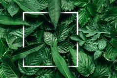 Disposición creativa hecha de flores y de hojas con la nota de la tarjeta de papel Endecha plana Concepto de la naturaleza imagen de archivo libre de regalías