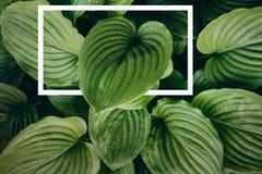Disposición creativa hecha de hojas con con un marco exhausto blanco Endecha plana imagen de archivo