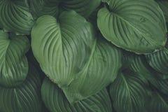 Disposición creativa hecha de hojas verdes Endecha plana Fondo de la naturaleza Imagen de archivo