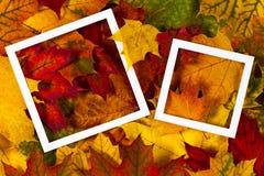 Disposición creativa hecha de las hojas de otoño coloridas con los marcos blancos y la tarjeta en blanco Foto de archivo