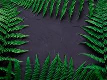 Disposición hecha de hojas verdes Concepto de la naturaleza Composición plana de la endecha para los bloggers, las revistas, los  Imágenes de archivo libres de regalías