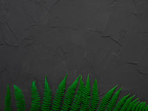 Disposición hecha de hojas verdes Concepto de la naturaleza Composición plana de la endecha para los bloggers, las revistas, los  Foto de archivo