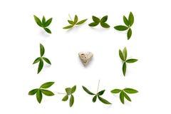 Disposition avec des feuilles de vert et une pierre sur le fond blanc Photo stock