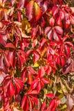 Disposition colorée 3 de feuilles d'automne Image stock