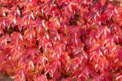 Disposition colorée 4 de feuilles d'automne Photos libres de droits