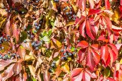 Disposition colorée 5 de feuilles d'automne Images stock