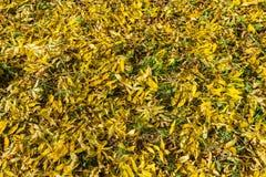 Disposition colorée 6 de feuilles d'automne Photographie stock libre de droits