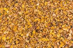 Disposition colorée 7 de feuilles d'automne Photographie stock