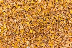 Disposition colorée 8 de feuilles d'automne Photo stock
