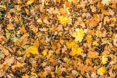 Disposition colorée 9 de feuilles d'automne Photos libres de droits