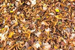 Disposition colorée 12 de feuilles d'automne Images stock