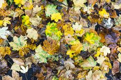 Disposition colorée 15 de feuilles d'automne Image libre de droits