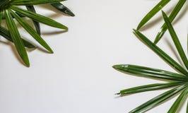 Disposition créative de nature faite de feuilles et fleurs tropicales Configuration plate Concept d'été Images libres de droits