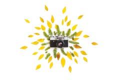 Disposition créative des succulents et des feuilles verts de jaune photo libre de droits