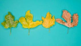 Disposition créative faite de feuilles vertes, concept de nature Image libre de droits