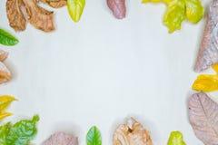Disposition créative faite de feuilles vertes, concept de nature Images stock