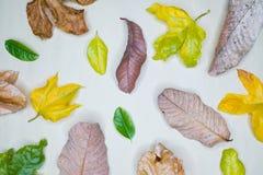Disposition créative faite de feuilles vertes, concept de nature Photos stock