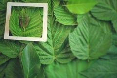 Disposition créative faite de fleurs et feuilles avec la note de carte de papier Configuration plate Concept de nature Image stock