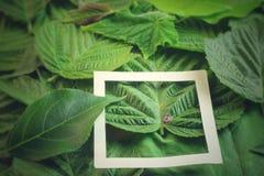 Disposition créative faite de fleurs et feuilles avec la note de carte de papier Configuration plate Concept de nature Photos stock