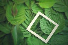 Disposition créative faite de fleurs et feuilles avec la note de carte de papier Configuration plate Concept de nature Photographie stock
