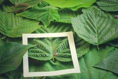 Disposition créative faite de fleurs et feuilles avec la note de carte de papier Configuration plate Concept de nature Image libre de droits