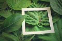 Disposition créative faite de fleurs et feuilles avec la note de carte de papier Configuration plate Concept de nature Photo stock