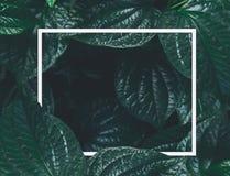 Disposition créative, feuille de cadre de livre blanc Photographie stock