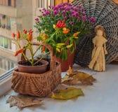 Disposition d'automne de poivre et de chrysanthèmes décoratifs Photographie stock libre de droits
