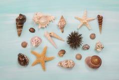 Disposition de différentes coquilles et étoiles de mer sur le bleu ou le turquo Images libres de droits