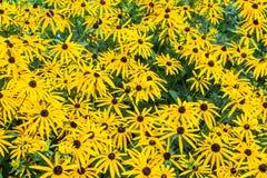 Disposition de fleurs de cône Photo stock