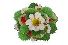 Disposition de fraises avec des marguerites et des fleurs de tansy d'isolement sur le blanc Chemin de coupure Photographie stock libre de droits