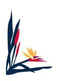 Disposition de page d'Oiseau-de-Paradis Image libre de droits
