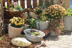 Disposition des fleurs d'automne dans un restaurant de jardin dans la campagne l'autriche photographie stock