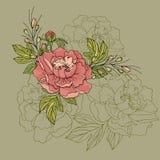 Disposition des fleurs de pivoine sur un fond vert photo libre de droits