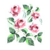 Disposition tendre de croquis rose de main d'aquarelle de roses Images libres de droits