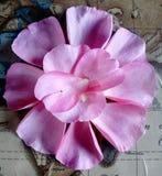 Dispositions florales de Patel Photographie stock libre de droits
