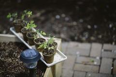 Dispositivi d'avviamento del giardino Fotografia Stock