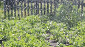 Dispositivo para molhar o jardim, jardim, gramado, camas de flor filme