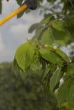 Dispositivo para rociar el pesticida en el jardín Fotos de archivo
