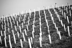 Disposizione astratta dei tubi bianchi Fotografia Stock Libera da Diritti